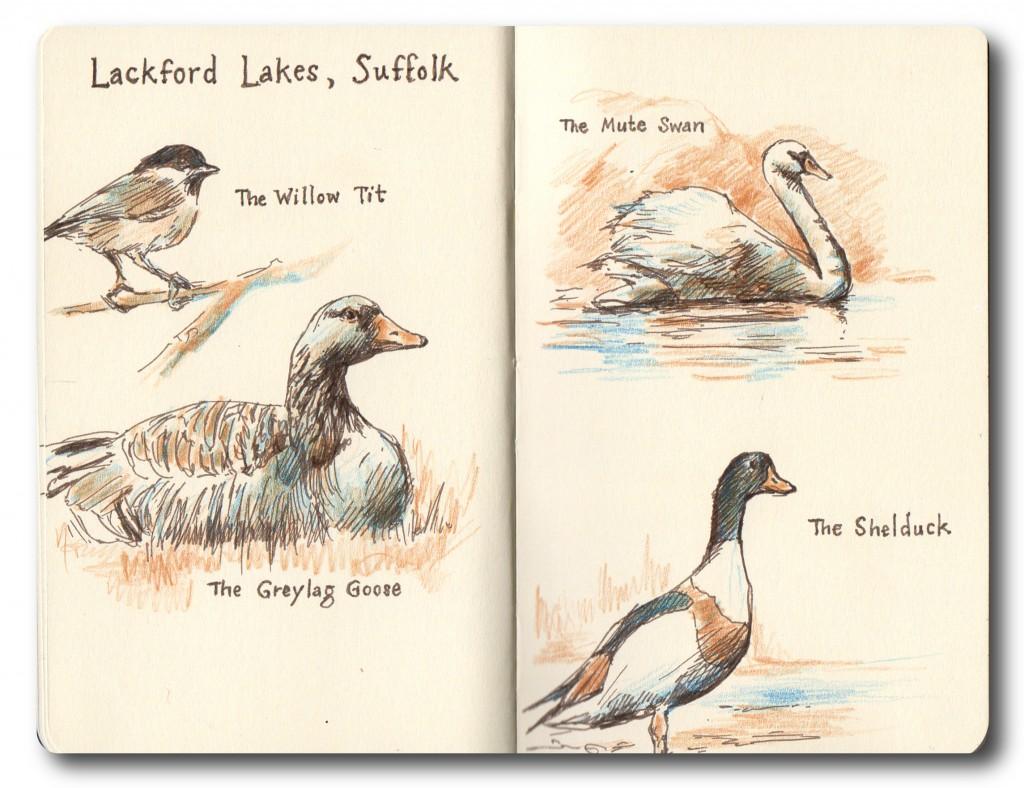 Lackford Lakes - birds seen